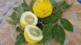 bergamotte-aufgeschnittene-zitrusfrucht-160x90
